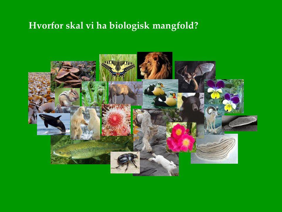 Hvorfor skal vi ha biologisk mangfold?