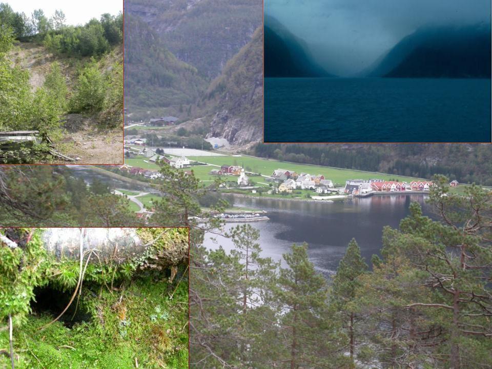 Hvilke muligheter åpner NiN  Kunnskapsinnhenting – av naturvariasjon –kartlegging av naturvariasjon – på, og ny kunnskap om, naturvariasjon –forskning på, og ny kunnskap om, naturvariasjon –kobling av arter mot naturtyper  Kunnskapsspredning –største utfordring: opplæring på alle nivåer (forvaltning, andre brukere, lærere, kartleggere, forskere)  NiN som dokumentasjonssystem for naturmangfold i Norge –svært mye kunnskap er fortsatt ikke inkludert i NiN- dokumentasjonen –kontinuerlig behov for oppgradering og videreutvikling