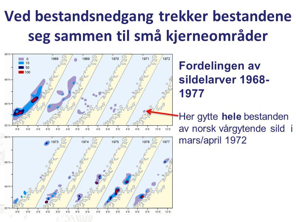 Ved bestandsnedgang trekker bestandene seg sammen til små kjerneområder Fordelingen av sildelarver 1968- 1977 Her gytte hele bestanden av norsk vårgyt