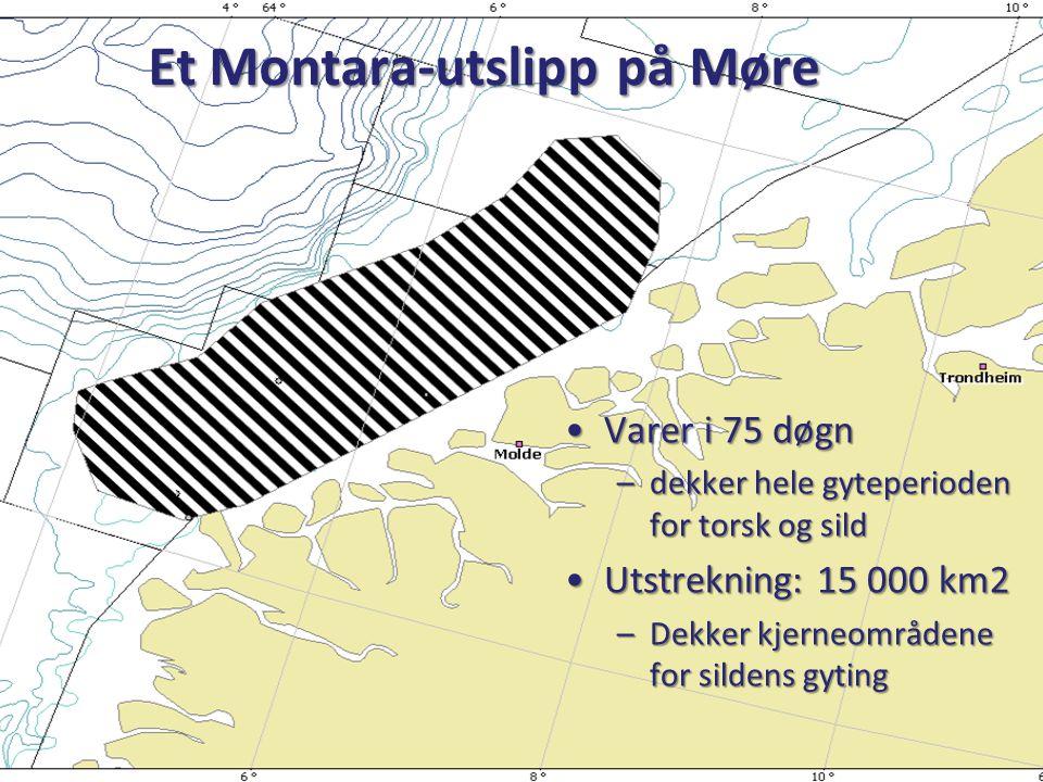 Et Montara-utslipp på Møre •Varer i 75 døgn –dekker hele gyteperioden for torsk og sild •Utstrekning: 15 000 km2 –Dekker kjerneområdene for sildens gy