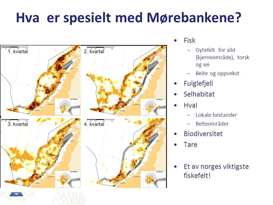 Hvordan kan oljeutslipp påvirke fiskebestandene?