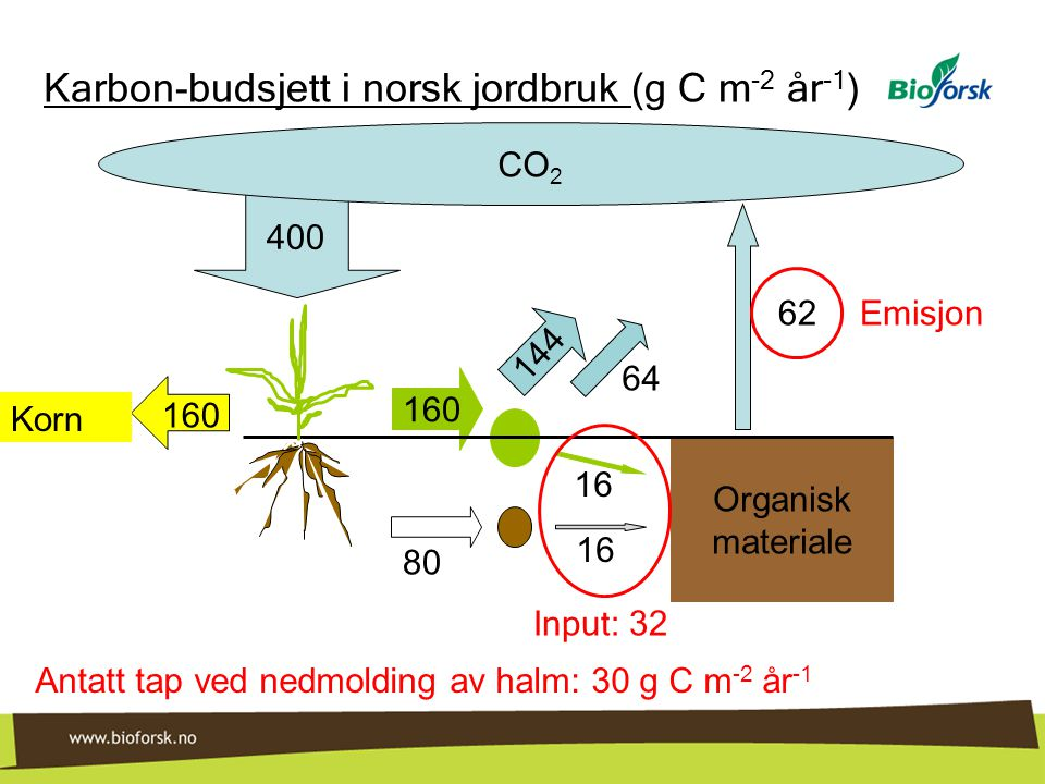 160 144 16 400 Organisk materiale CO 2 160 Korn 16 64 80 Karbon-budsjett i norsk jordbruk (g C m -2 år -1 ) Input: 32 62 Emisjon Antatt tap ved nedmol