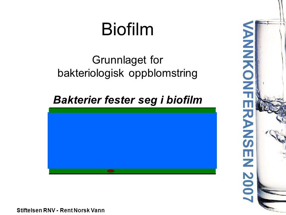 Stiftelsen RNV - Rent Norsk Vann Biofilm Grunnlaget for bakteriologisk oppblomstring Bakterier fester seg i biofilm