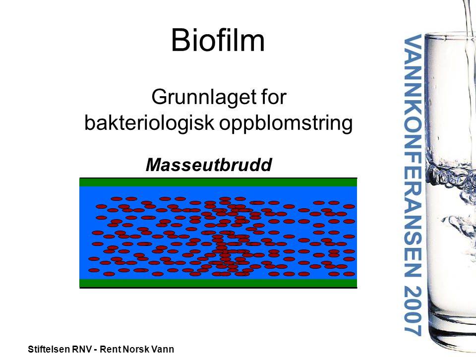 Stiftelsen RNV - Rent Norsk Vann Biofilm Grunnlaget for bakteriologisk oppblomstring Masseutbrudd