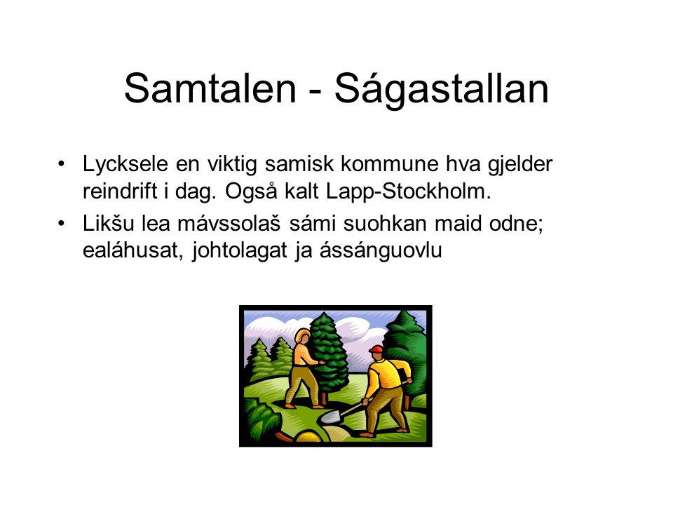 Samtalen - Ságastallan •Lycksele en viktig samisk kommune hva gjelder reindrift i dag.