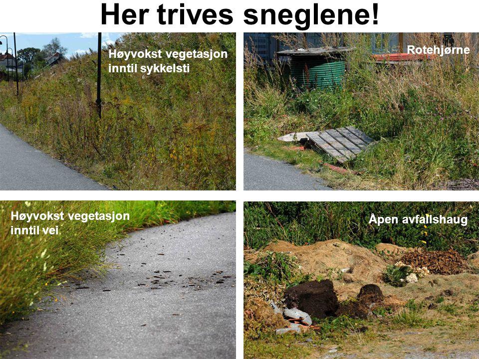 Her trives sneglene! Høyvokst vegetasjon inntil sykkelsti Rotehjørne Høyvokst vegetasjon inntil vei Åpen avfallshaug