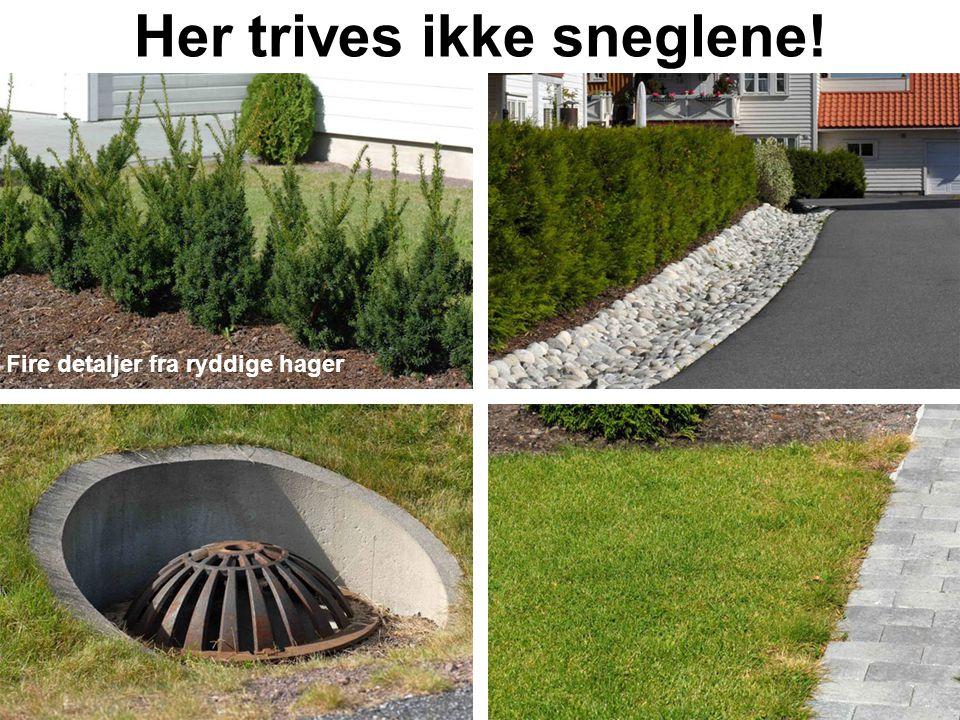 Her trives ikke sneglene! Fire detaljer fra ryddige hager