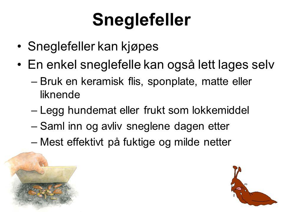 Sneglefeller •Sneglefeller kan kjøpes •En enkel sneglefelle kan også lett lages selv –Bruk en keramisk flis, sponplate, matte eller liknende –Legg hun