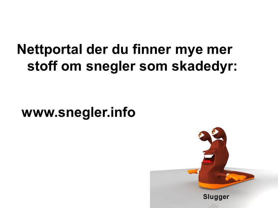 Nettportal der du finner mye mer stoff om snegler som skadedyr: Slugger www.snegler.info