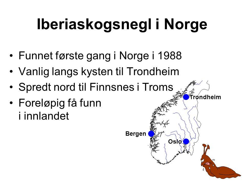 •Funnet første gang i Norge i 1988 •Vanlig langs kysten til Trondheim •Spredt nord til Finnsnes i Troms •Foreløpig få funn i innlandet Iberiaskogsnegl i Norge Trondheim Bergen Oslo