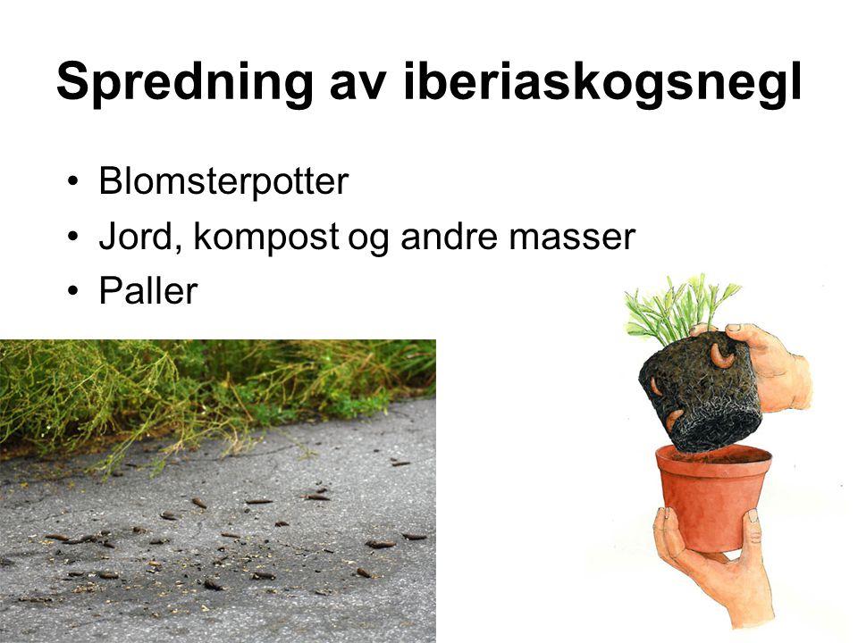 Spredning av iberiaskogsnegl •Blomsterpotter •Jord, kompost og andre masser •Paller