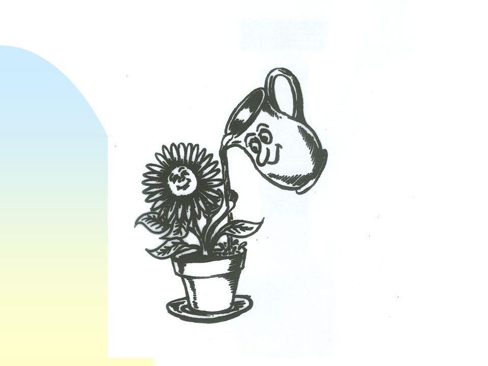 Bjørnar Allgot Practise-Attitude- Knowledge