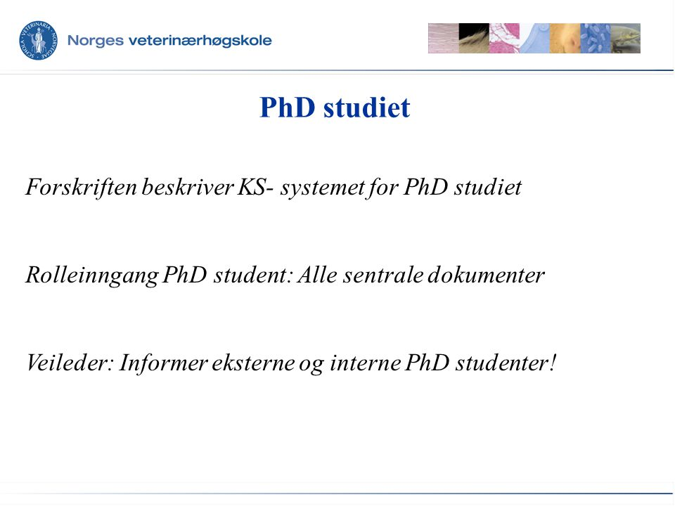 PhD studiet Forskriften beskriver KS- systemet for PhD studiet Rolleinngang PhD student: Alle sentrale dokumenter Veileder: Informer eksterne og interne PhD studenter!