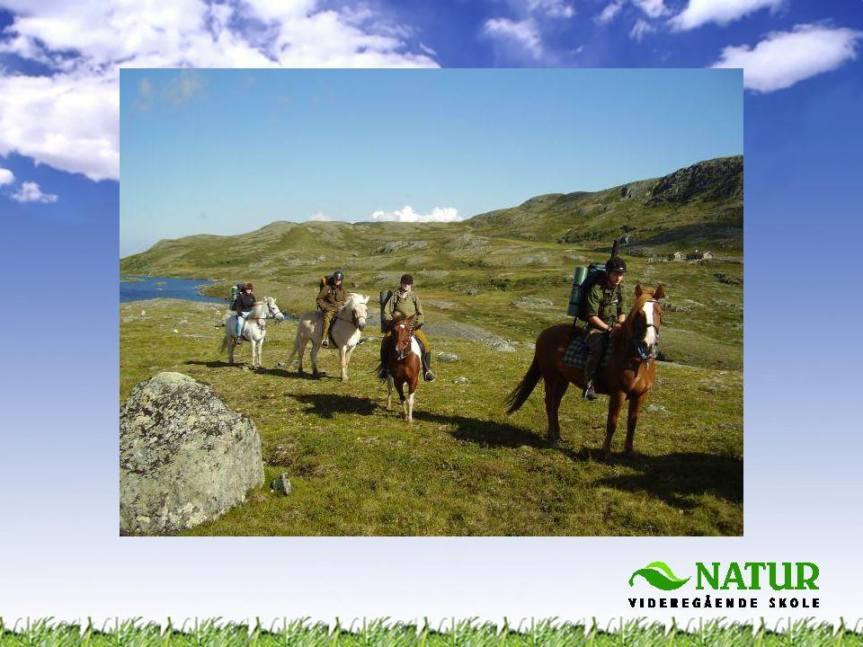 •Hvordan drive bedrift •Muligheter for turisme i Norge •Organisering og ledelse •Instruksjon, veiledning og guiding •Oppleve noe nytt