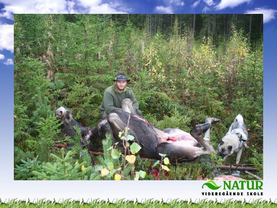 •God og bærekraftig forvaltning •Etisk jakt •Jaktbare og ikke jaktbare arter •Jaktformer •Viktig matressurs •Håndtering og foredling av kjøttressursene •Jakt som tilbud i utmarksturisme