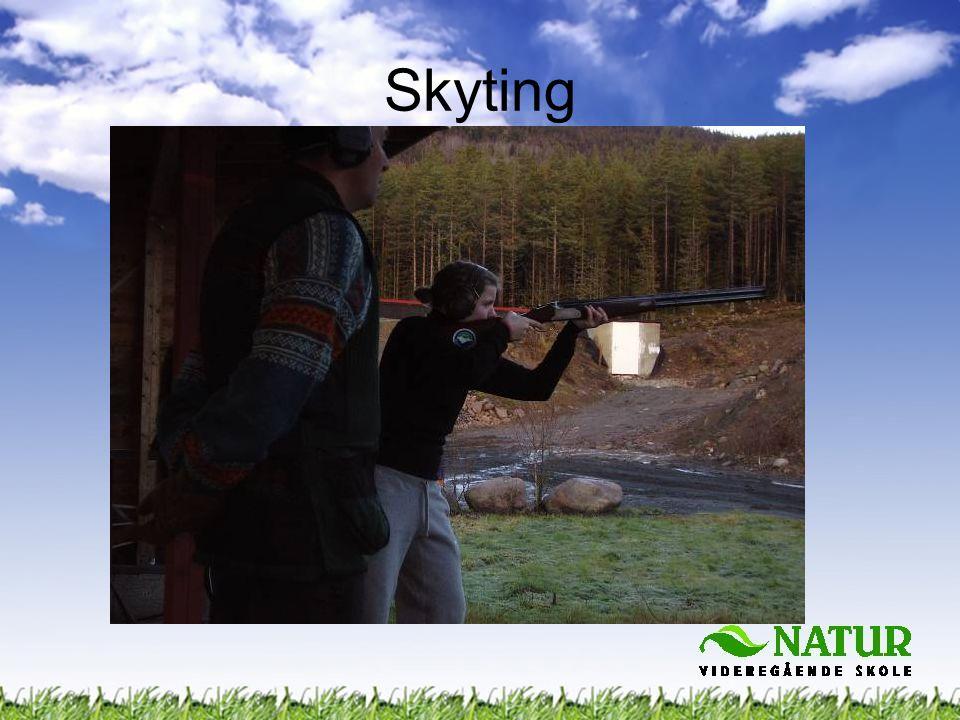 Skyting