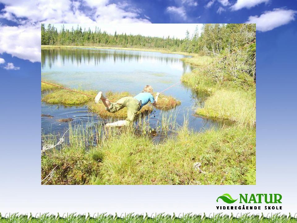 •Kart og kompass •Bekledning •Hva kan spises ute i naturen.