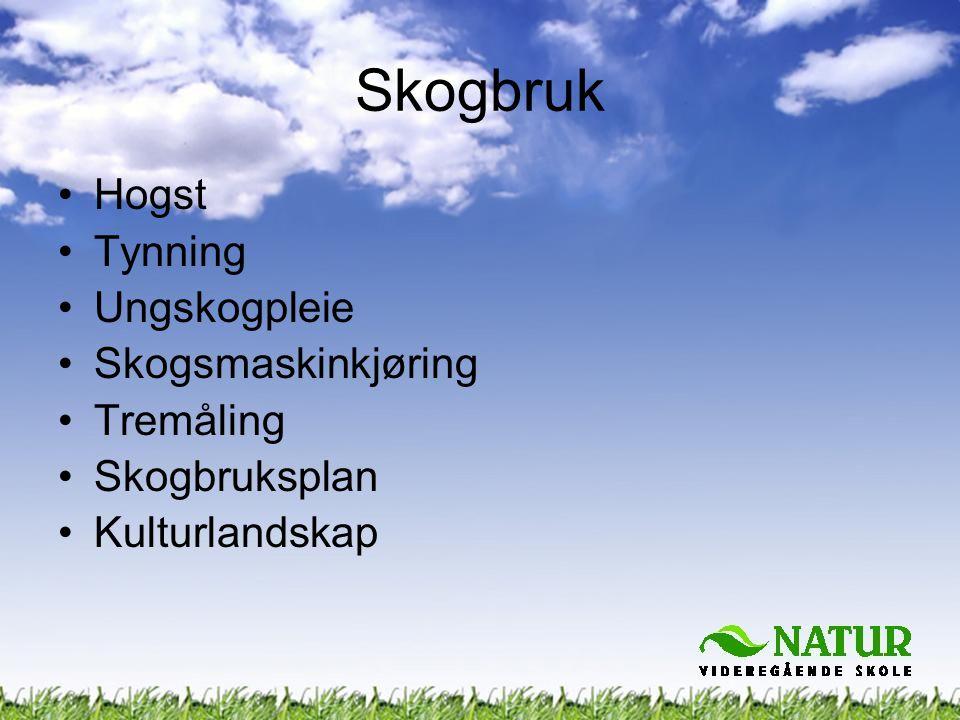 •Hogst •Tynning •Ungskogpleie •Skogsmaskinkjøring •Tremåling •Skogbruksplan •Kulturlandskap