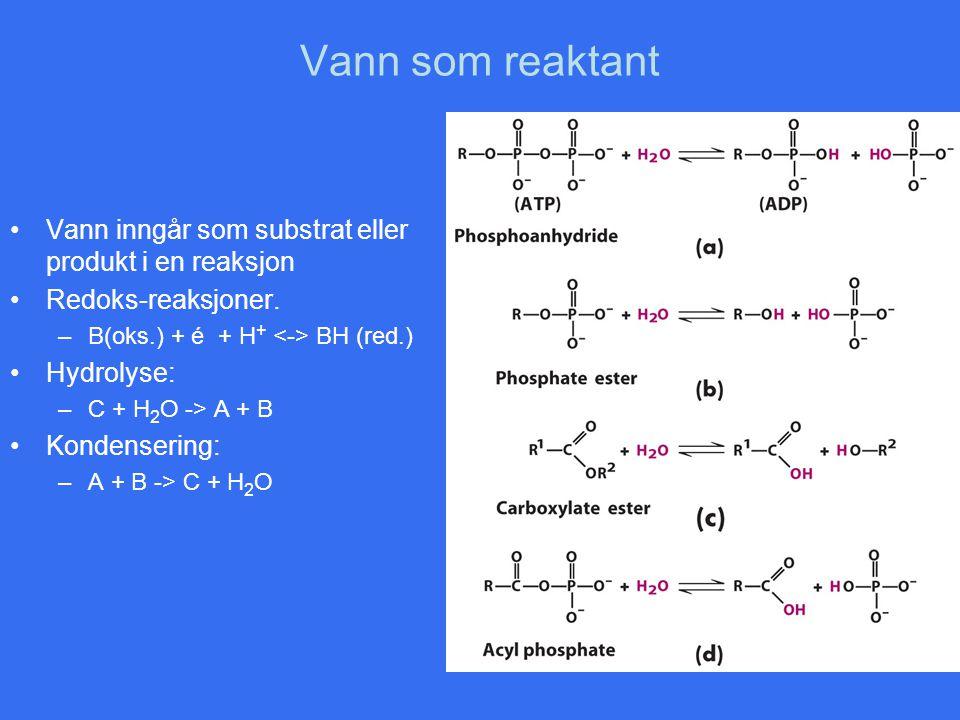 Vann som reaktant •Vann inngår som substrat eller produkt i en reaksjon •Redoks-reaksjoner. –B(oks.) + é + H + BH (red.) •Hydrolyse: –C + H 2 O -> A +