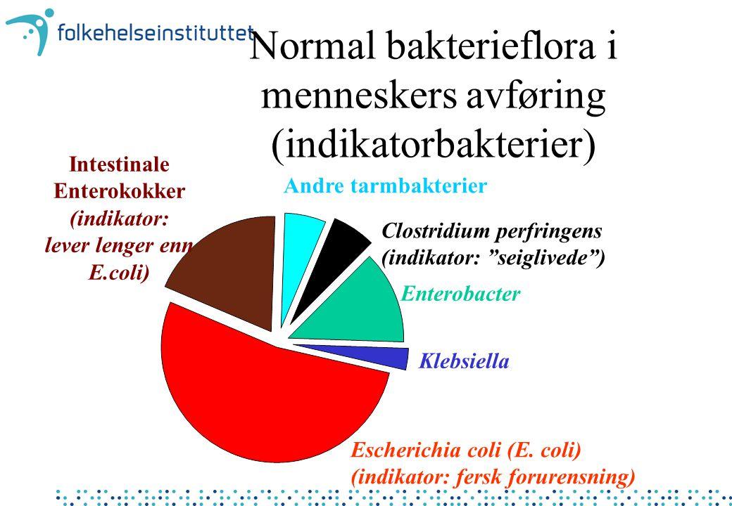 Normal bakterieflora i menneskers avføring (indikatorbakterier) Intestinale Enterokokker (indikator: lever lenger enn E.coli) Escherichia coli (E.