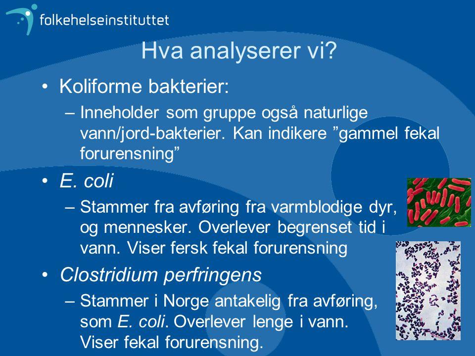 """Hva analyserer vi? •Koliforme bakterier: –Inneholder som gruppe også naturlige vann/jord-bakterier. Kan indikere """"gammel fekal forurensning"""" •E. coli"""