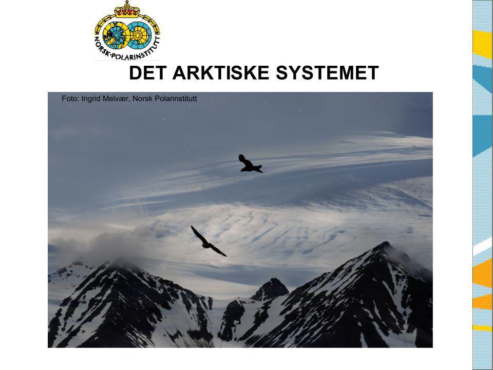 DET ARKTISKE SYSTEMET