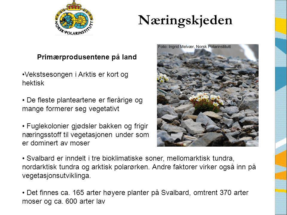 Næringskjeden • Svalbard er inndelt i tre bioklimatiske soner, mellomarktisk tundra, nordarktisk tundra og arktisk polarørken. Andre faktorer virker o