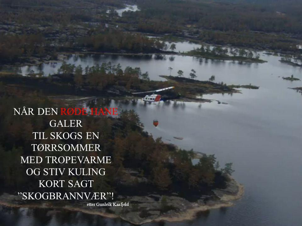 "NÅR DEN RØDE HANE GALER TIL SKOGS EN TØRRSOMMER MED TROPEVARME OG STIV KULING KORT SAGT ""SKOGBRANNVÆR""! etter Gunleik Kaafjeld"