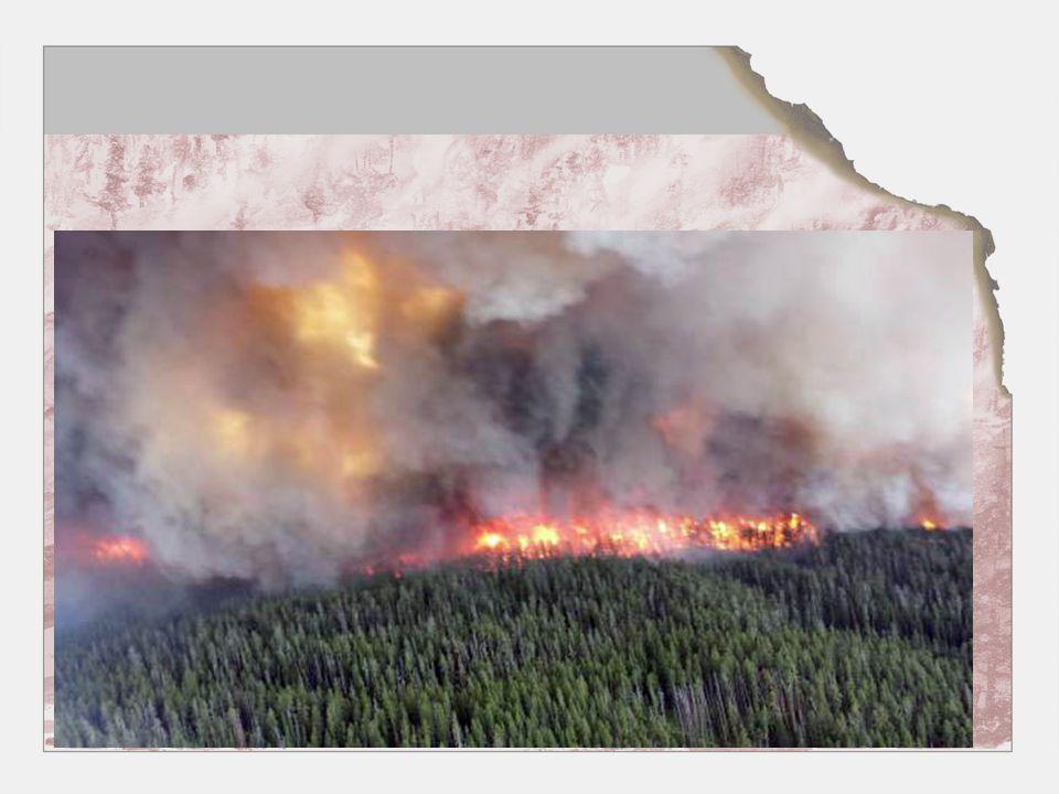 Sammarbeid mellom aktørene •Brannvesenet –Brannlag –Innkallingsmannskaper –Nabo brannvesen •Skogbrannreserven / skogeiere / bondelag •Sivilforsvaret FIG •Skogbrannhelikopteret •Nødnett / samband