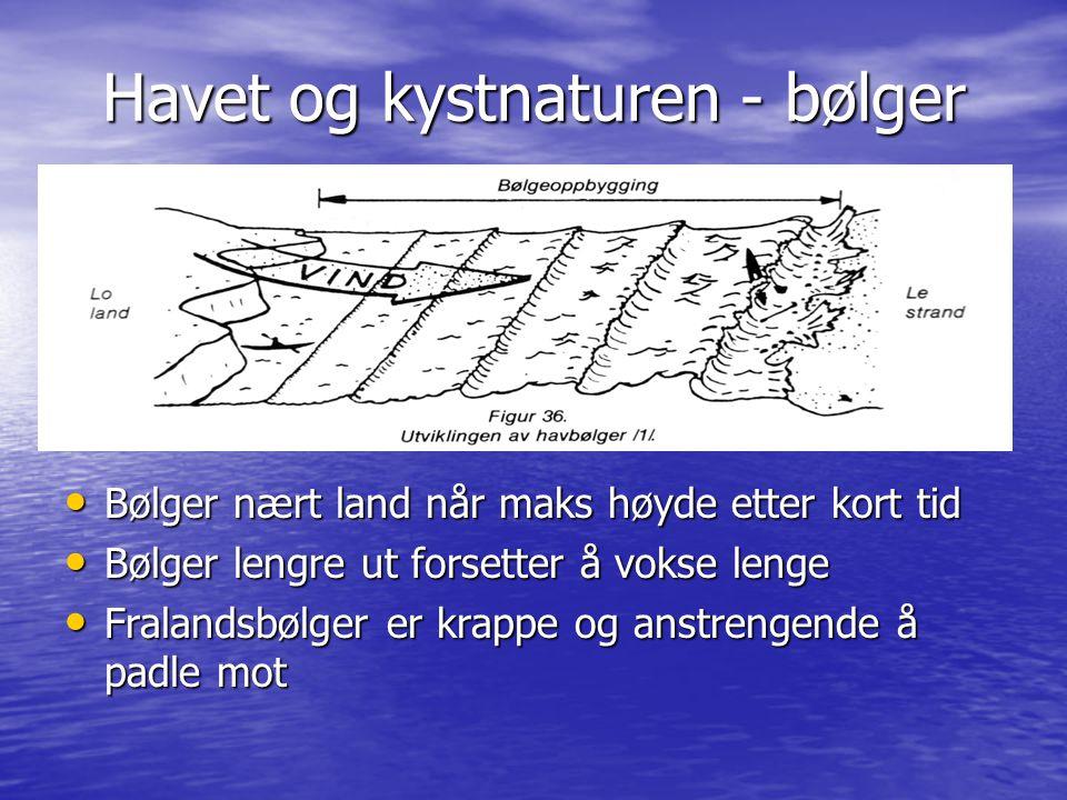 Havet og kystnaturen - bølger • Bølger nært land når maks høyde etter kort tid • Bølger lengre ut forsetter å vokse lenge • Fralandsbølger er krappe o