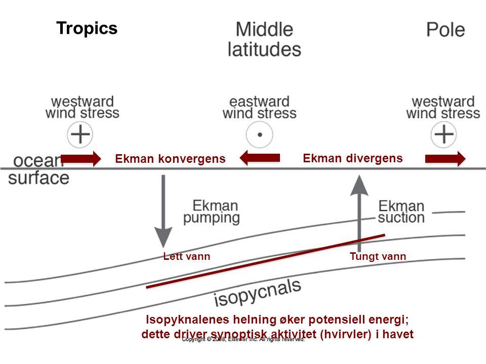 Tropics Ekman konvergens Ekman divergens Lett vann Tungt vann Isopyknalenes helning øker potensiell energi; dette driver synoptisk aktivitet (hvirvler) i havet