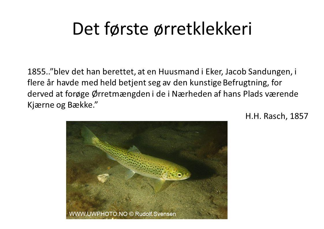 """Det første ørretklekkeri 1855..""""blev det han berettet, at en Huusmand i Eker, Jacob Sandungen, i flere år havde med held betjent seg av den kunstige B"""