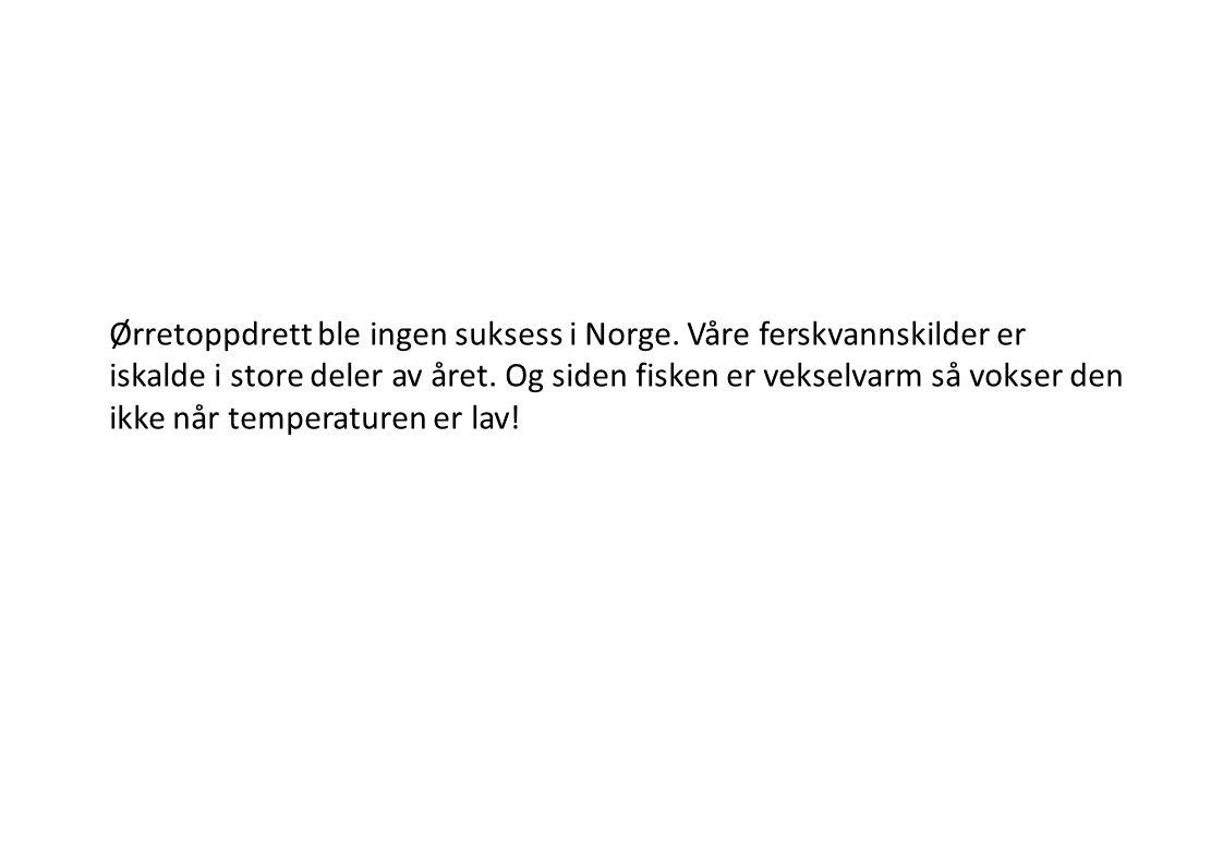 Ørretoppdrett ble ingen suksess i Norge. Våre ferskvannskilder er iskalde i store deler av året. Og siden fisken er vekselvarm så vokser den ikke når