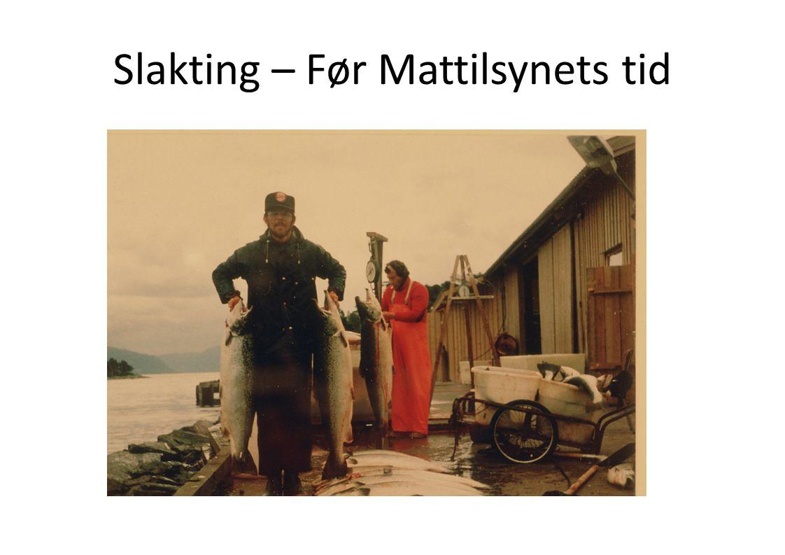 Slakting – Før Mattilsynets tid