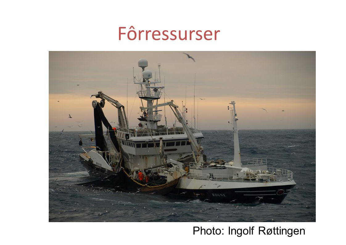 Fôrressurser Photo: Ingolf Røttingen
