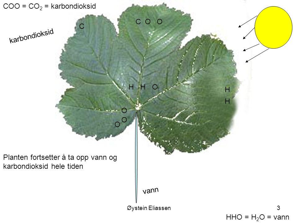 Øystein Eliassen3 COO = CO 2 = karbondioksid HHO = H 2 O = vann vann H H O karbondioksid C O O HHO COO Planten fortsetter å ta opp vann og karbondioksid hele tiden