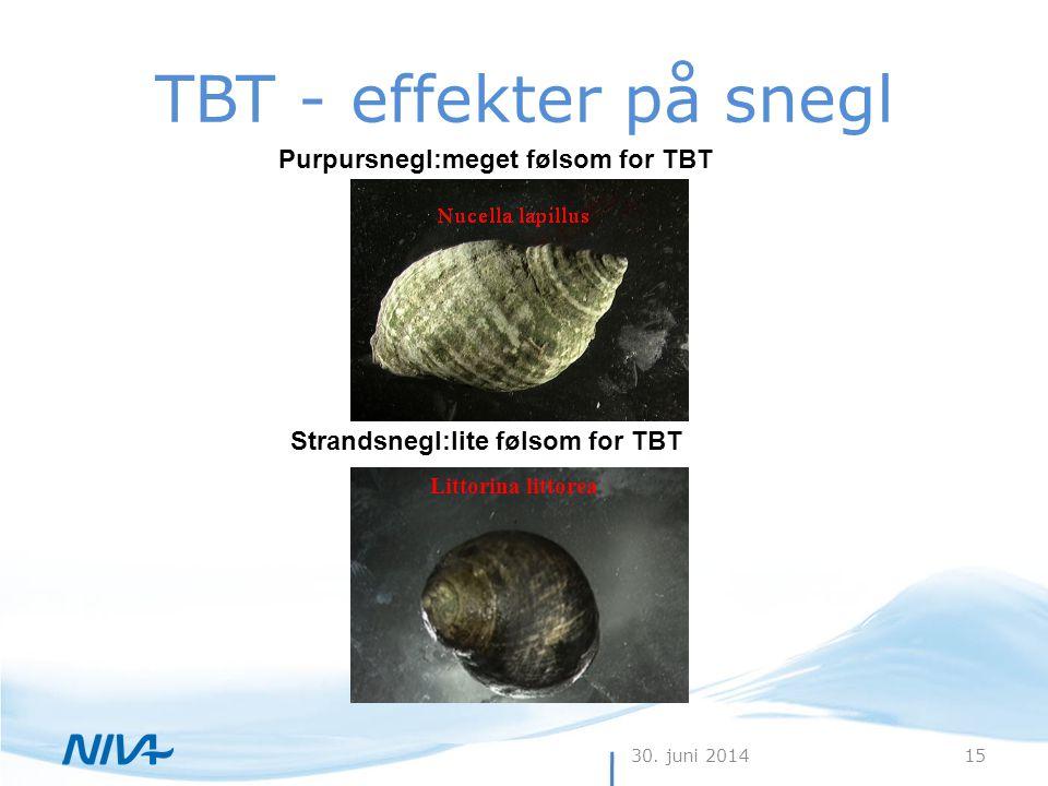 30. juni 201415 TBT - effekter på snegl Purpursnegl:meget følsom for TBT Strandsnegl:lite følsom for TBT Littorina littorea