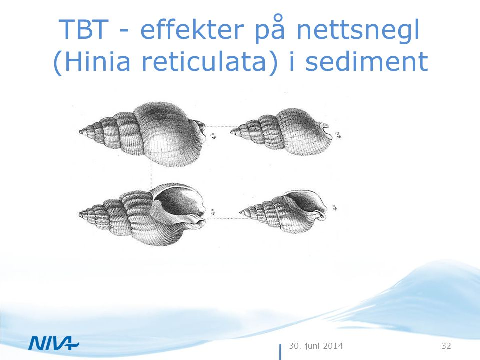 30. juni 201432 TBT - effekter på nettsnegl (Hinia reticulata) i sediment