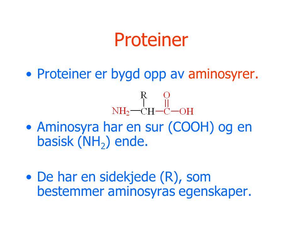 Proteiner •Proteiner er bygd opp av aminosyrer. •Aminosyra har en sur (COOH) og en basisk (NH 2 ) ende. •De har en sidekjede (R), som bestemmer aminos