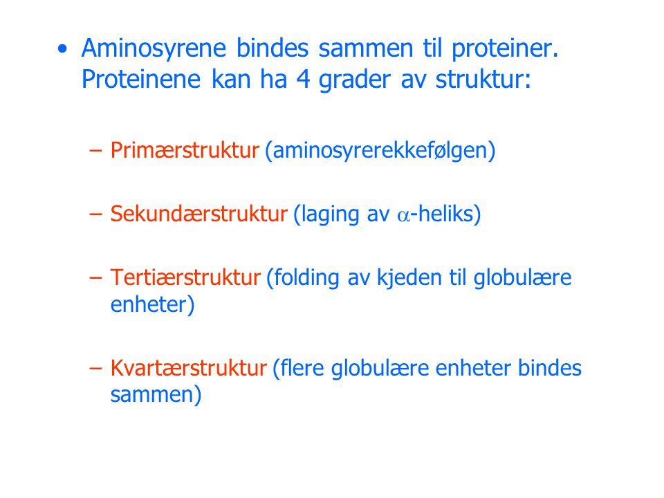 •Aminosyrene bindes sammen til proteiner. Proteinene kan ha 4 grader av struktur: –Primærstruktur (aminosyrerekkefølgen) –Sekundærstruktur (laging av