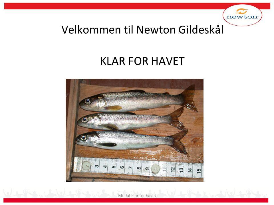 Fisken eksponeres saltvann i 48 timer.