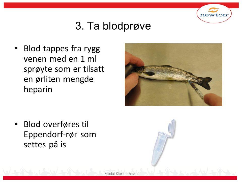 3. Ta blodprøve Blod tappes fra rygg venen med en 1 ml sprøyte som er tilsatt en ørliten mengde heparin Blod overføres til Eppendorf-rør som settes på