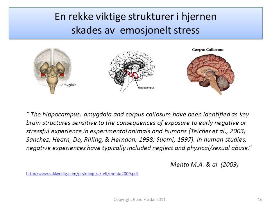 """En rekke viktige strukturer i hjernen skades av emosjonelt stress 16Copyright Rune Fardal 2011 """" The hippocampus, amygdala and corpus callosum have be"""