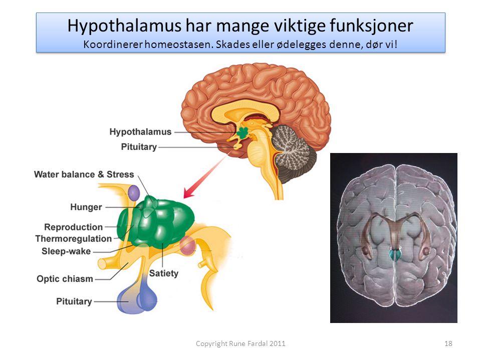 Hypothalamus har mange viktige funksjoner Koordinerer homeostasen. Skades eller ødelegges denne, dør vi! 18Copyright Rune Fardal 2011