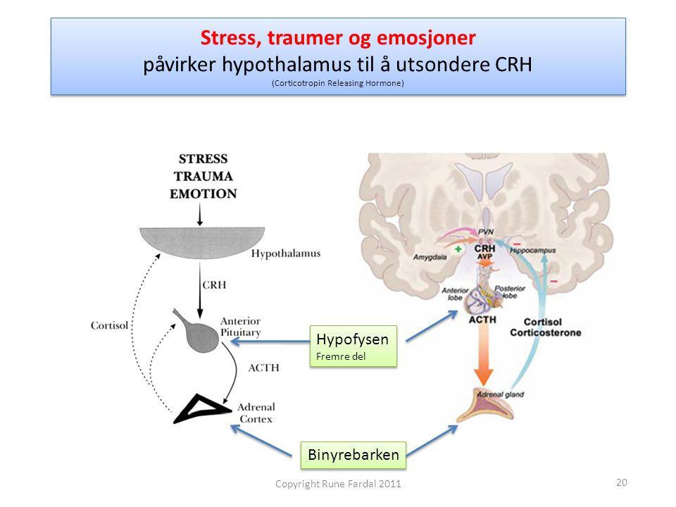 Stress, traumer og emosjoner påvirker hypothalamus til å utsondere CRH (Corticotropin Releasing Hormone) Binyrebarken Hypofysen Fremre del Hypofysen F