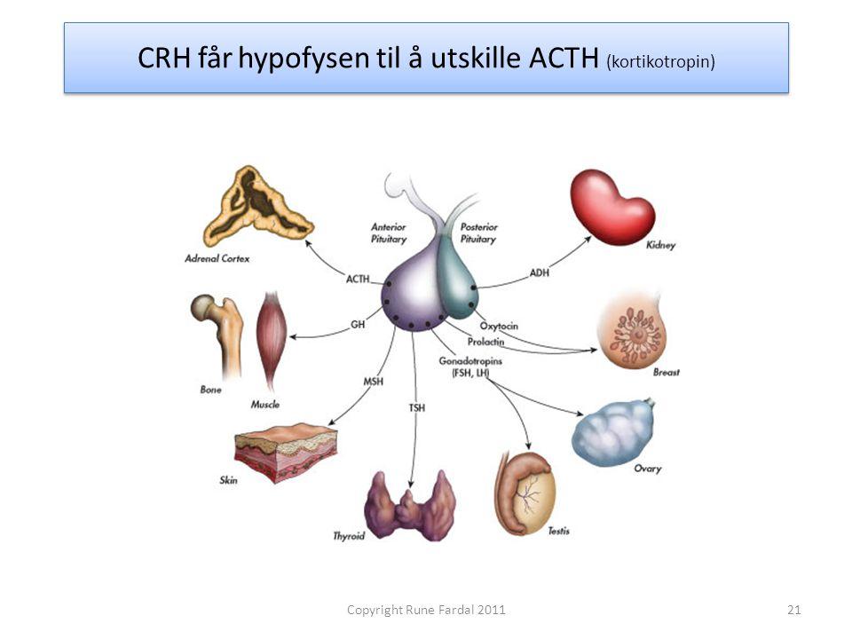 CRH får hypofysen til å utskille ACTH (kortikotropin) 21Copyright Rune Fardal 2011