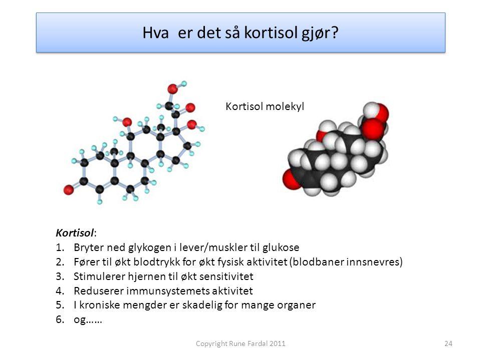 Hva er det så kortisol gjør? Kortisol: 1.Bryter ned glykogen i lever/muskler til glukose 2.Fører til økt blodtrykk for økt fysisk aktivitet (blodbaner