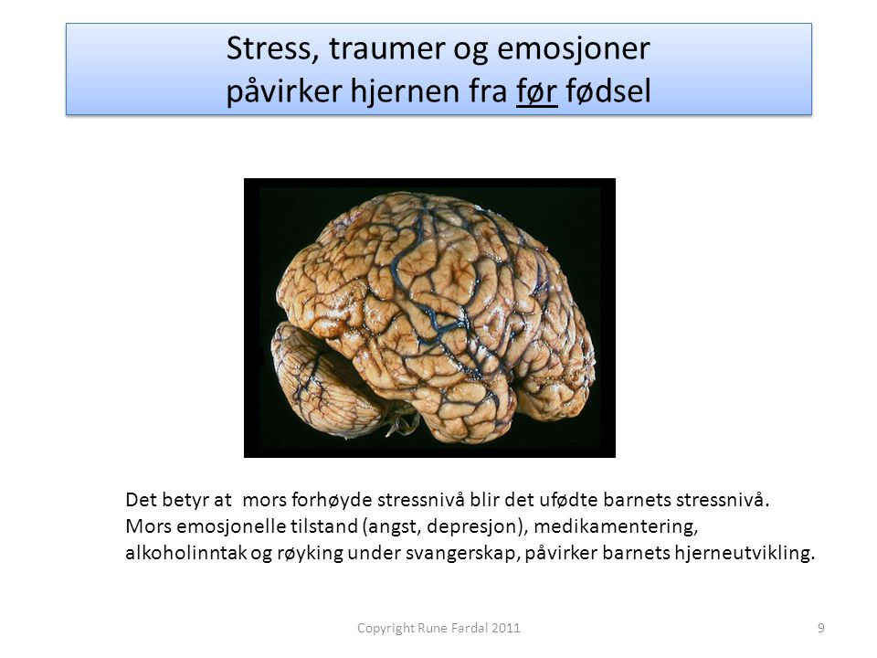 Stress, traumer og emosjoner påvirker hjernen fra før fødsel 9Copyright Rune Fardal 2011 Det betyr at mors forhøyde stressnivå blir det ufødte barnets