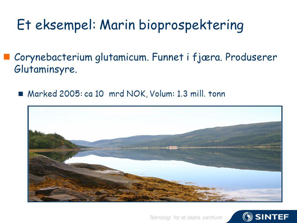 Teknologi for et bedre samfunn Et eksempel: Marin bioprospektering  Corynebacterium glutamicum. Funnet i fjæra. Produserer Glutaminsyre.  Marked 200