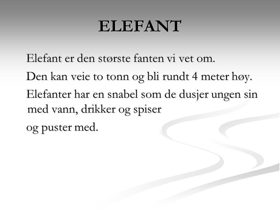 ELEFANT Elefant er den største fanten vi vet om. Elefant er den største fanten vi vet om. Den kan veie to tonn og bli rundt 4 meter høy. Den kan veie